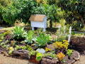 New-Succulent-garden-07222019