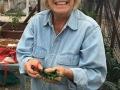 Susie Malone's Harvest