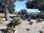 Oceana Rock Garden 2020
