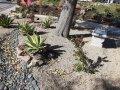04-rock-garden